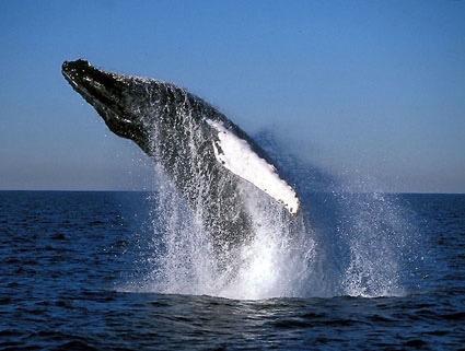 National Parks - Casa Big Sur