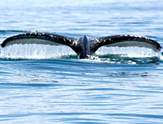 Whales & Dolphin Watching Tours