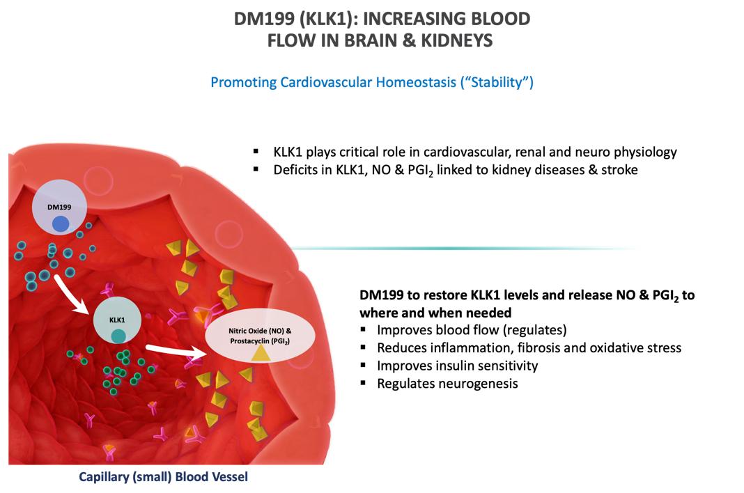 Increasing Blood flow in Brains and Kidneys