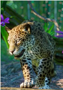 Planet Zoo: South America Pack System Requirements