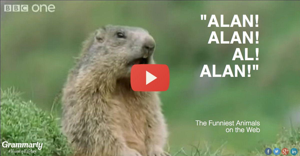 You won't believe what these animals get up to in their spare time! This might be the funniest animal video on the web.
