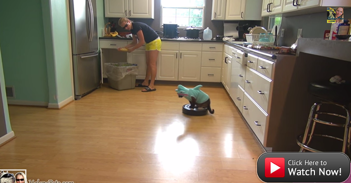 #FunnyFriday: Yes, this is a cat in a shark suit cruising around on a vacuum