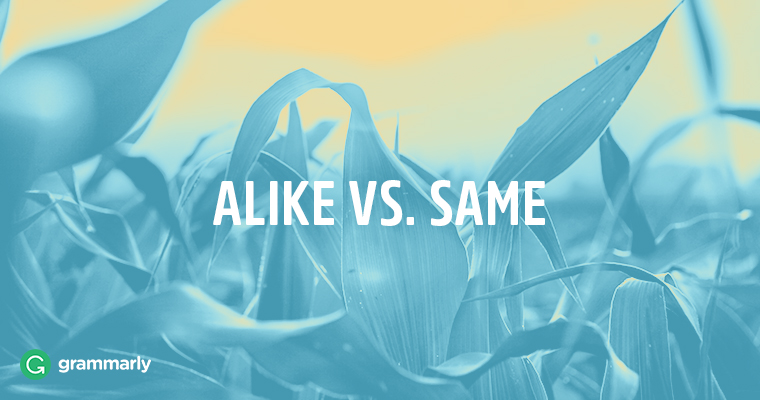 "How to Use ""Alike"" and ""Same"" Correctly"