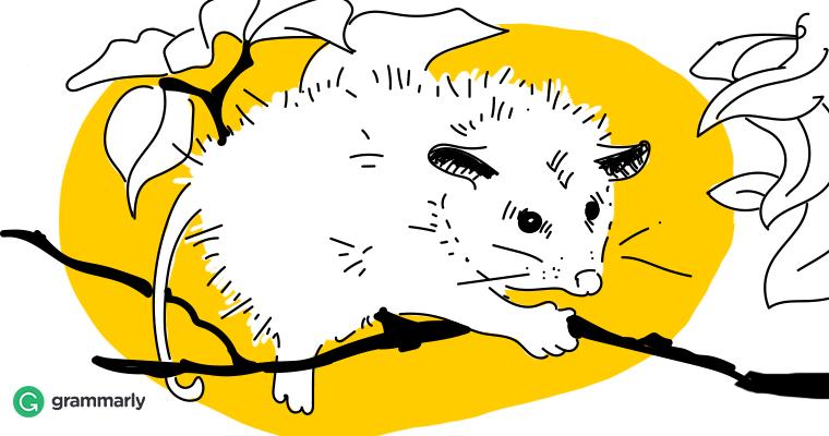 Is It Possum or Opossum?