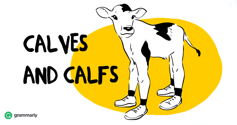 "How to Use ""Calves"" and ""Calfs"" Correctly"
