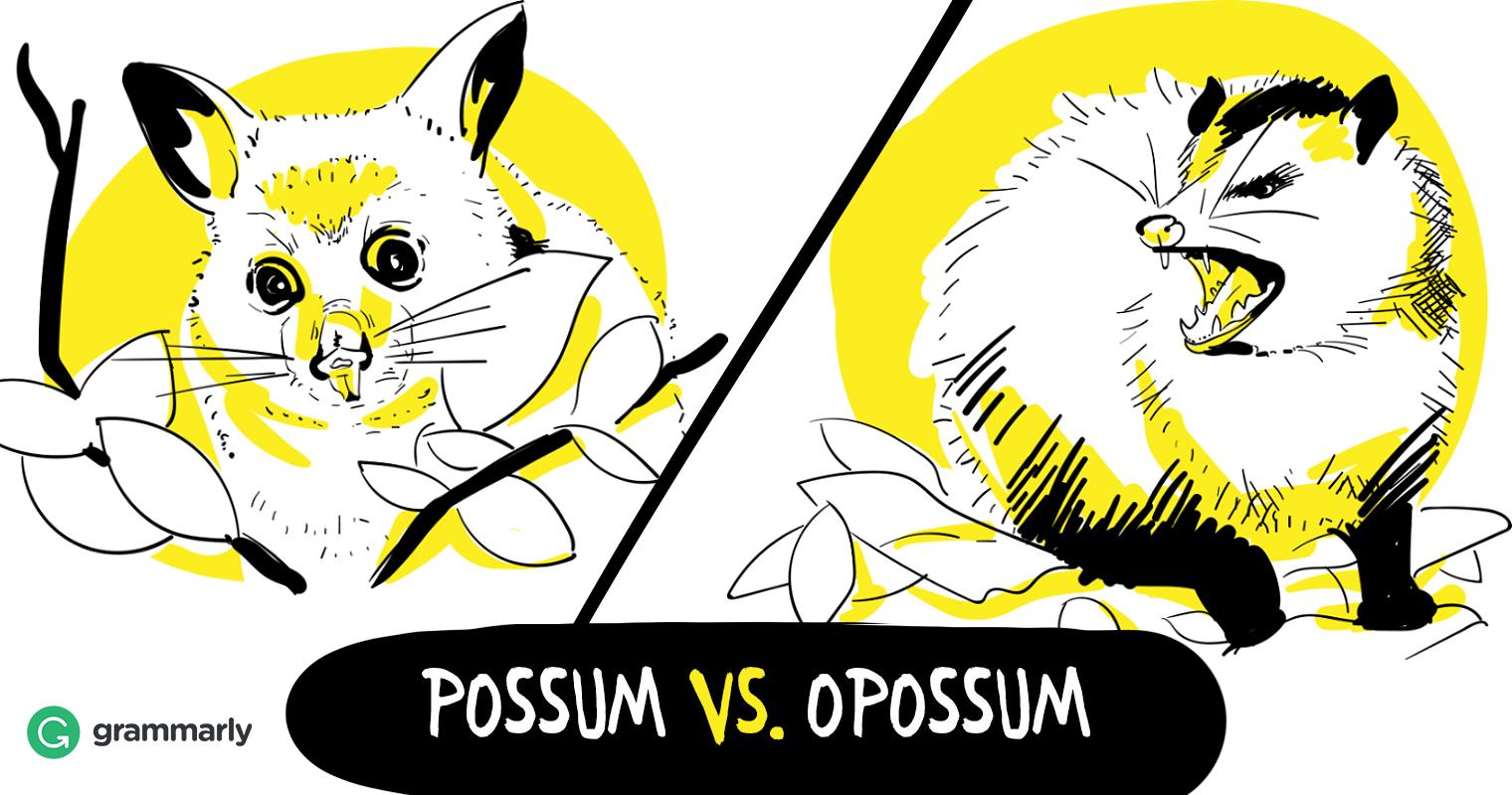 Opossum vs. Possum