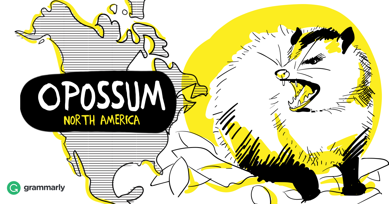 Opossum vs. Possum—Is It the Same Animal? | Grammarly