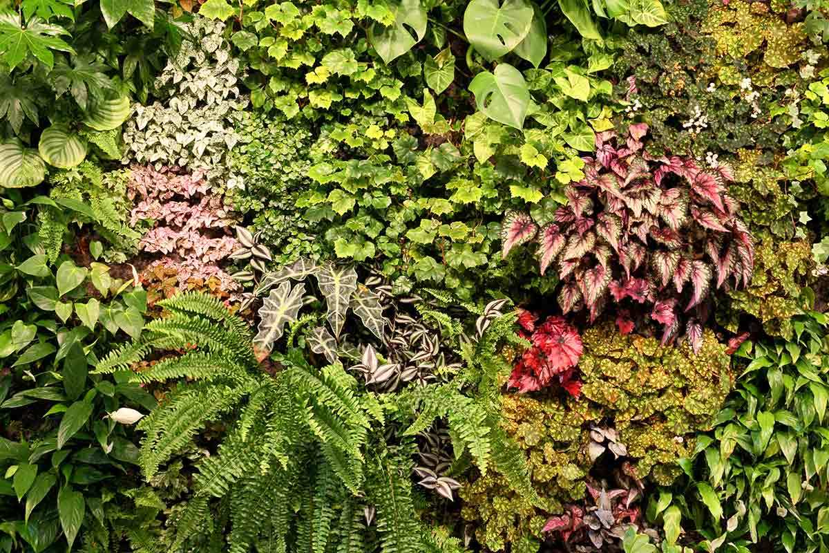 How to Make a Living Wall in 6 Easy Steps