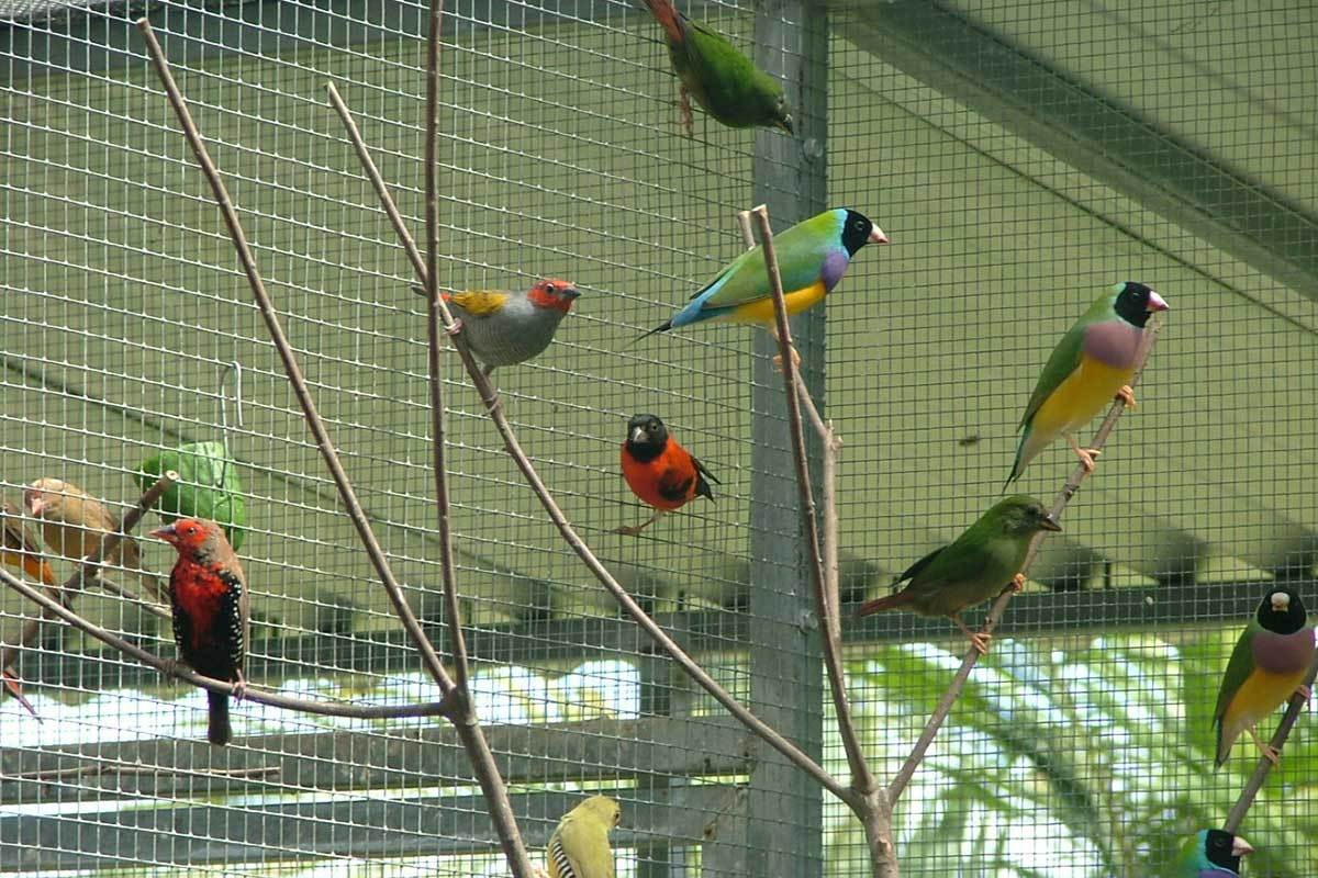 why an outdoor aviary will make your backyard famous