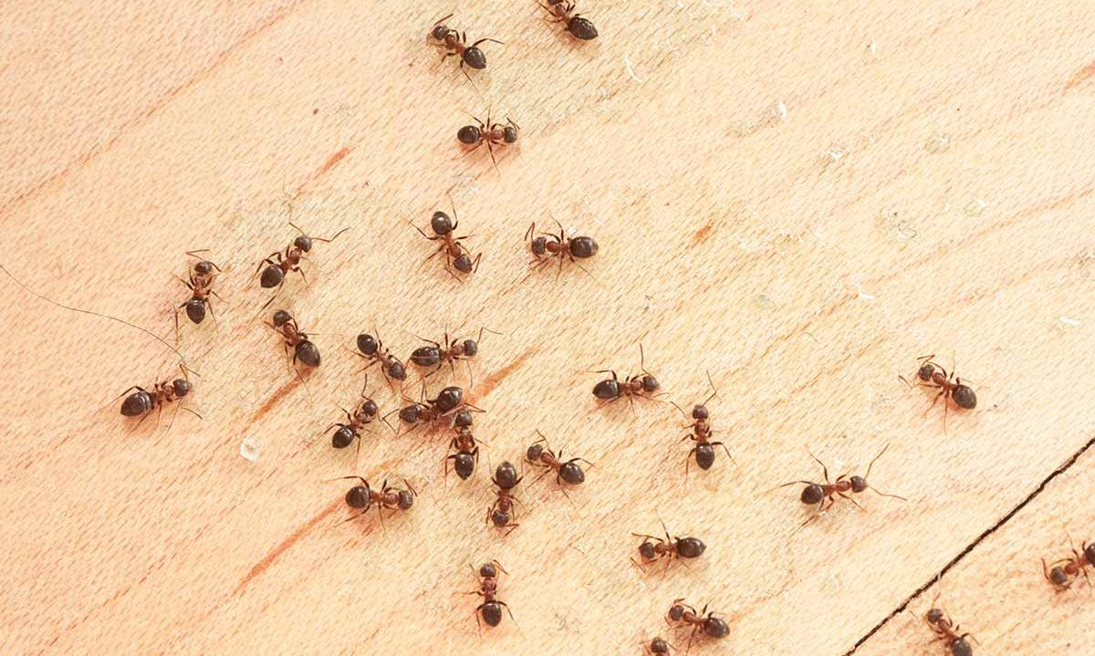 Preventative Pest Control: 3 Easy Measures You Should Take