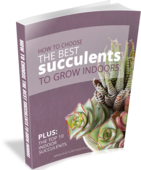 This_free_pdf_guide_will_help_you_choose_the_best_succulents_to_grow_indoors!