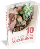 This_free_pdf_guide_tells_you_10_easy_to_grow_succulents_and_where_to_buy_them