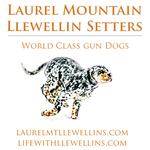 Lml smart logo