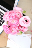 Close_up_roses_and_computer
