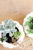 Fall-succulent-planter-7