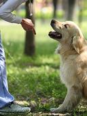 Dog_training_video_series_small_optin