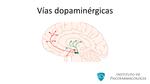 Vias_dopaminergicas_