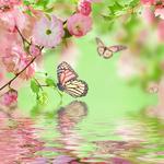 Shutterstock 150716867