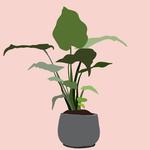 Plant2pink_bg_small_2