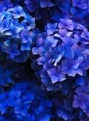 Flowers 300