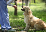 Dog training video series low res
