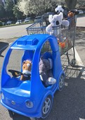 Kiwi and friends in grocery cart