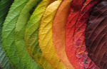 Leaves change 1245 x 1