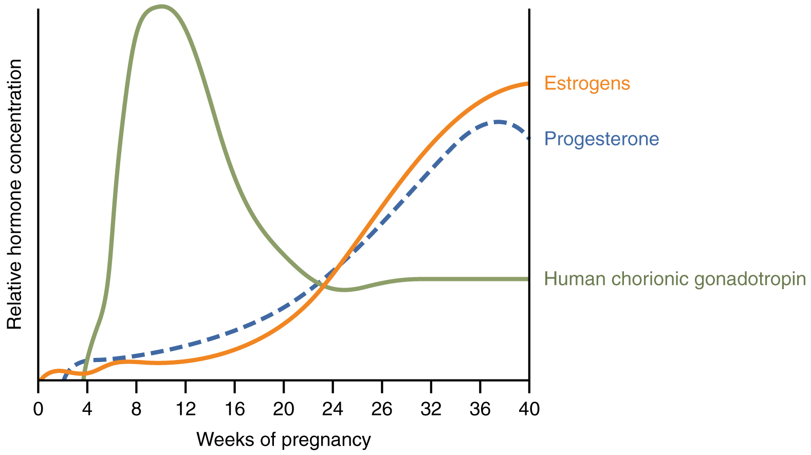 Anatomy and Physiology - Maternal Changes During Pregnancy, Labor ...