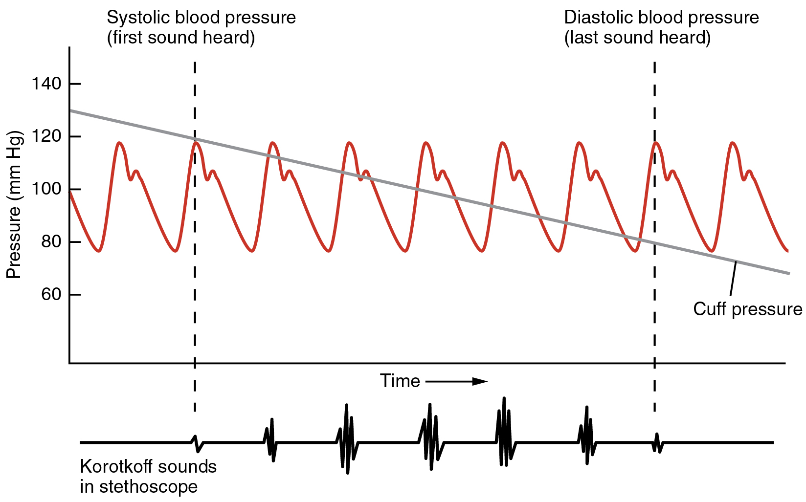 Anatomy and Physiology - Blood Flow, Blood Pressure, and Resistance