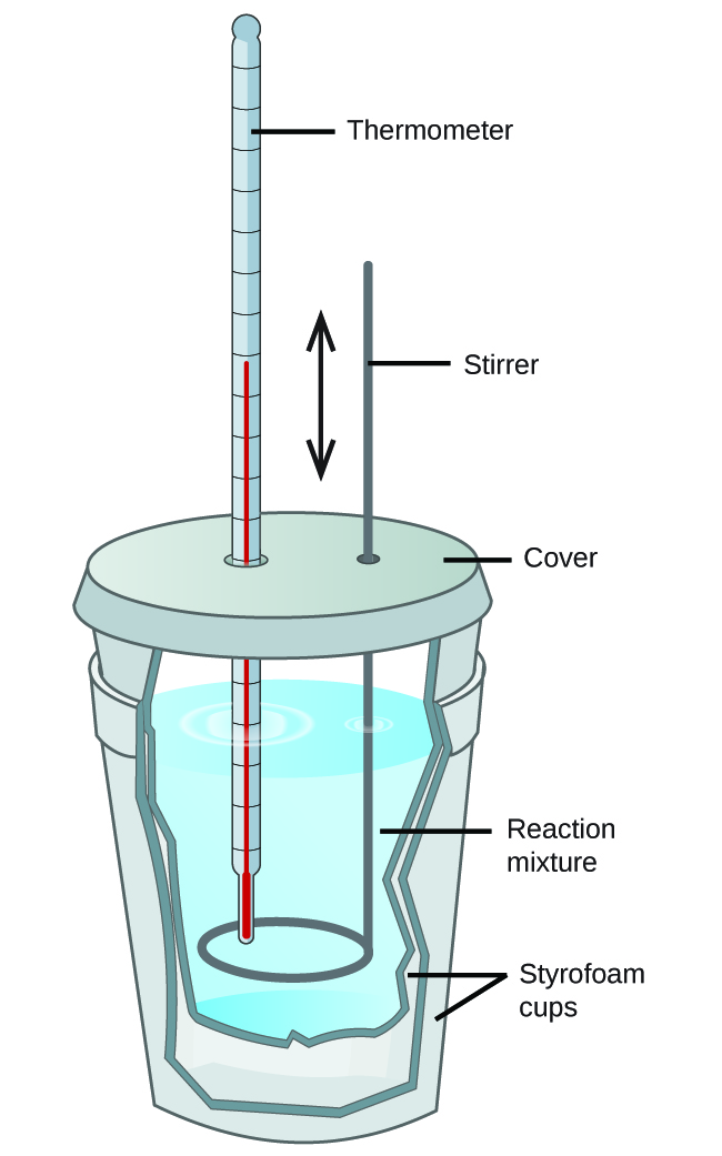 "Two Styrofoam cups are shown nested in one another with a cover over the top. A thermometer and stirring rod are inserted through the cover and into the solution inside the cup, which is shown as a cut-away. The stirring rod has a double headed arrow next to it facing up and down. The liquid mixture inside the cup is labeled ""Reaction mixture."""