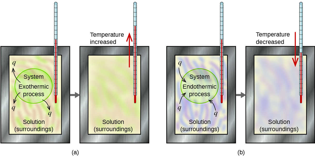 "Two diagrams labeled a and b are shown. Each is made up of two rectangular containers with a thermometer inserted into the top right and extending inside. There is a right facing arrow connecting each box in each diagram. The left container in diagram a depicts a pink and green swirling solution with the terms ""Exothermic process"" and ""System"" written in the center with arrows facing away from the terms pointing to ""q."" The labels ""Solution"" and ""Surroundings"" are written at the bottom of the container. The right container in diagram a has the term ""Solution"" written at the bottom of the container and a red arrow facing up near the thermometer with the phrase ""Temperature increased"" next to it. The pink and green swirls are more blended in this container. The left container in diagram b depicts a purple and blue swirling solution with the terms ""Endothermic process"" and ""System"" written in the center with arrows facing away from the terms and ""Solution"" and ""Surroundings"" written at the bottom. The arrows point away from the letter ""q."" The right container in diagram b has the term ""Solution"" written at the bottom and a red arrow facing down near the thermometer with the phrase ""Temperature decreased"" next to it. The blue and purple swirls are more blended in this container."