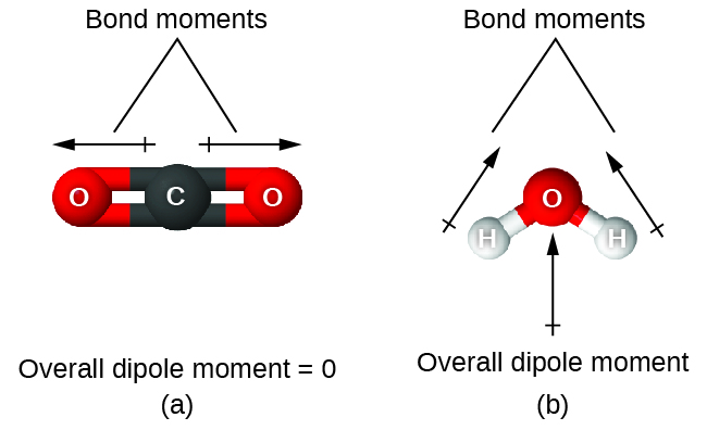 "Two images are shown and labeled, ""a"" and ""b."" Image a shows a carbon atom bonded to two oxygen atoms in a ball-and-stick representation. Two arrows face away from the center of the molecule in opposite directions and are drawn horizontally like the molecule. These arrows are labeled, ""Bond moments,"" and the image is labeled, ""Overall dipole moment equals 0."" Image b shows an oxygen atom bonded to two hydrogen atoms in a downward-facing v-shaped arrangement. An upward-facing, vertical arrow is drawn below the molecule while two upward and inward facing arrows are drawn above the molecule. The upper arrows are labeled, ""Bond moments,"" while the image is labeled, ""Overall dipole moment."""