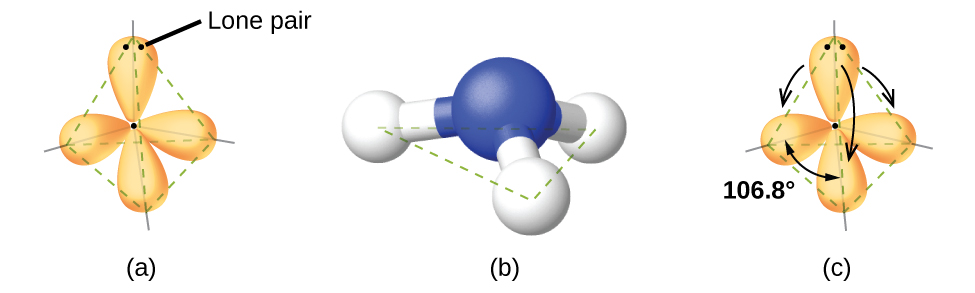 "Three images are shown and labeled, ""a,"" ""b,"" and ""c."" Image a shows a nitrogen atom single bonded to three hydrogen atoms. There are four oval-shaped orbs that surround each hydrogen and one facing away from the rest of the molecule. These orbs are located in a tetrahedral arrangement. Image b shows a ball-and-stick model of the nitrogen single bonded to the three hydrogen atoms. Image c is the same as image a, but there are four curved, double headed arrows that circle the molecule and are labeled, ""106.8 degrees."""