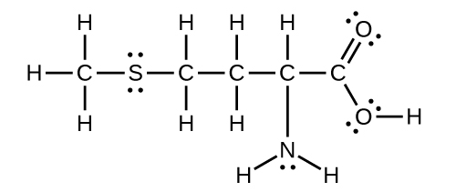 A Lewis structure is shown in which a carbon atom is single bonded to three hydrogen atoms and single bonded to a sulfur atom with two lone pairs of electrons. The sulfur atom is attached to a chain of four singly bonded carbon atoms, the first two of which are single bonded to two hydrogen atoms each, and the third of which is single bonded to a hydrogen atom and single bonded to a nitrogen atom which has one lone electron pair. The nitrogen atom is also single bonded to two hydrogen atoms. The fourth andfinal carbon in the chain is double bonded to an oxygen with two lone pairs of electrons and single bonded to an oxygen atom with two lone pairs of electrons. The second oxygen atom is single bonded to a hydrogen atom.