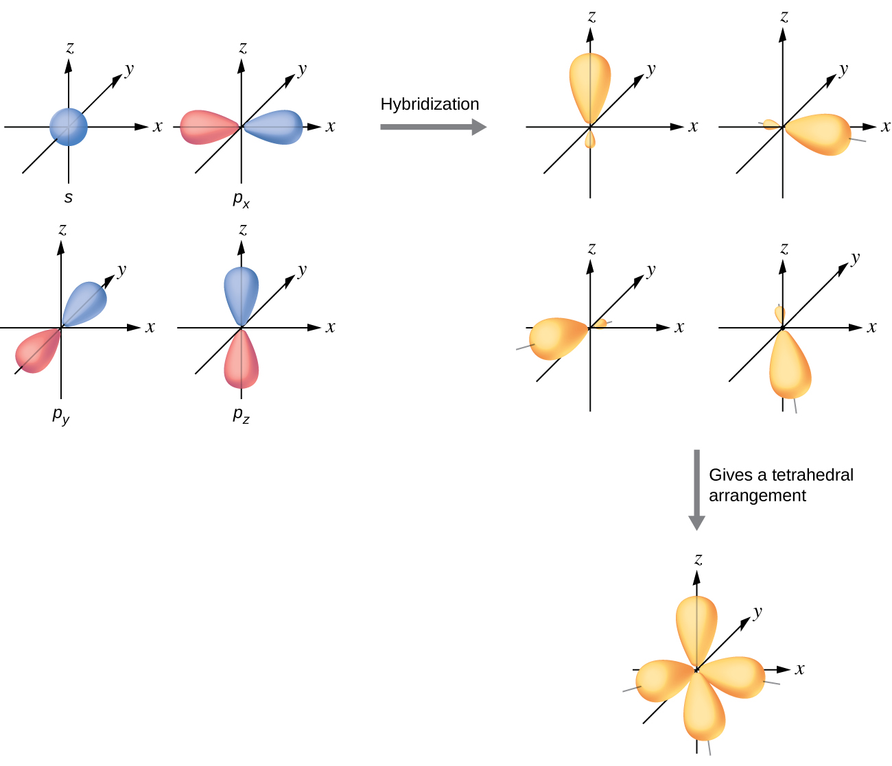 """A series of three diagrams connected by a right-facing arrow that is labeled, """"Hybridization,"""" and a downward-facing arrow labeled, """"Gives a tetrahedral arrangement,"""" are shown. The first diagram shows a blue spherical orbital and three red, peanut-shaped orbitals, each placed on an x, y, z axis system. The three red orbitals are located on the x , y and z axes, respectively. The second diagram shows the same four orbitals, but they are now purple and have one enlarged lobe and one smaller lobe. Each lies in a different axis in the drawing. The third diagram shows the same four orbitals, but their smaller lobes now overlap to form a tetrahedral structure."""