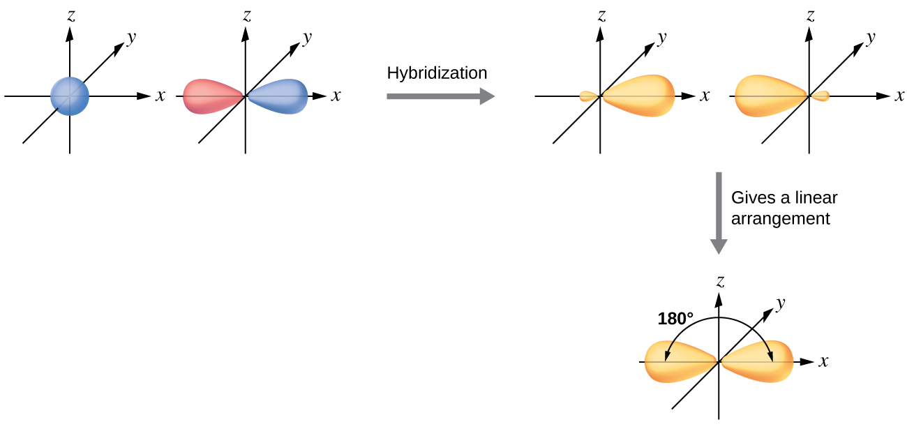 """A series of three diagrams connected by a right-facing arrow that is labeled, """"Hybridization,"""" and a downward-facing arrow labeled, """"Gives a linear arrangement,"""" are shown. The first diagram shows a blue spherical orbital and a red, peanut-shaped orbital, each placed on an X, Y, Z axis system. The second diagram shows the same two orbitals, but they are now purple and have one enlarged lobe and one smaller lobe. Each lies along the x-axis in the drawing. The third diagram shows the same two orbitals, but their smaller lobes now overlap along the x-axis while their larger lobes are located at and labeled as """"180 degrees"""" from one another."""