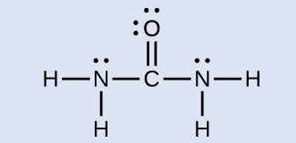A Lewis structure is shown in which a carbon atom is double bonded to an oxygen atom that has two lone pairs of electrons. The carbon atom forms single bonds to two nitrogen atoms. Each nitrogen is single bonded to two hydrogen atoms, and each nitrogen atoms has one lone pair of electrons.