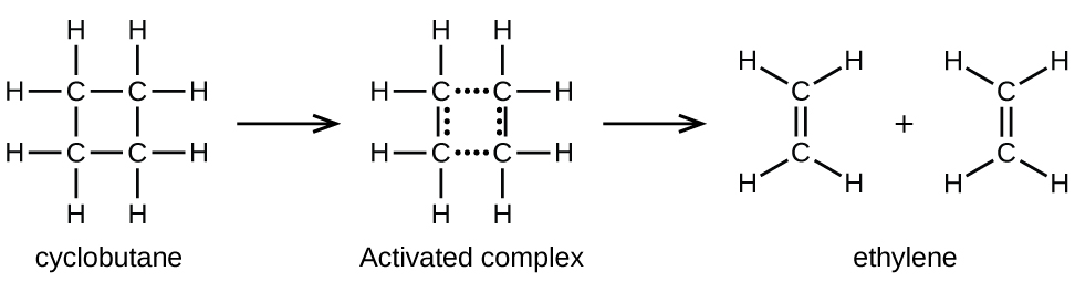 "In this figure, structural formulas are used to illustrate a chemical reaction, including an intermediate step. On the left, a structural formula for cyclobutane is shown. This structure is composed of 4 C atoms connected with single bonds in a square shape. Each C atom is bonded to two other C atoms in the structure, leaving two bonds for H atoms pointing outward above, below, left, and right. This structure is labeled, ""Cyclohexane."" An arrow points right to a similar structure which has the upper and lower bonds replaced by rows of 4 dots. Similarly, columns of 3 dots appear just inside the line segments indicating the vertically oriented single bonds in the structure. The label ""Activated complex"" appears beneath this structure. A second arrow points right to two identical ethane molecules with a plus symbol between them. Each of these molecules contains two C atoms connected with a double bond oriented vertically between them. The C atom at the top of these molecules has H atoms bonded above to the right and left. Similarly, the lower C atom has two H atoms bonded below to the right and left. Below these two molecules appears the label ""Ethylene."""