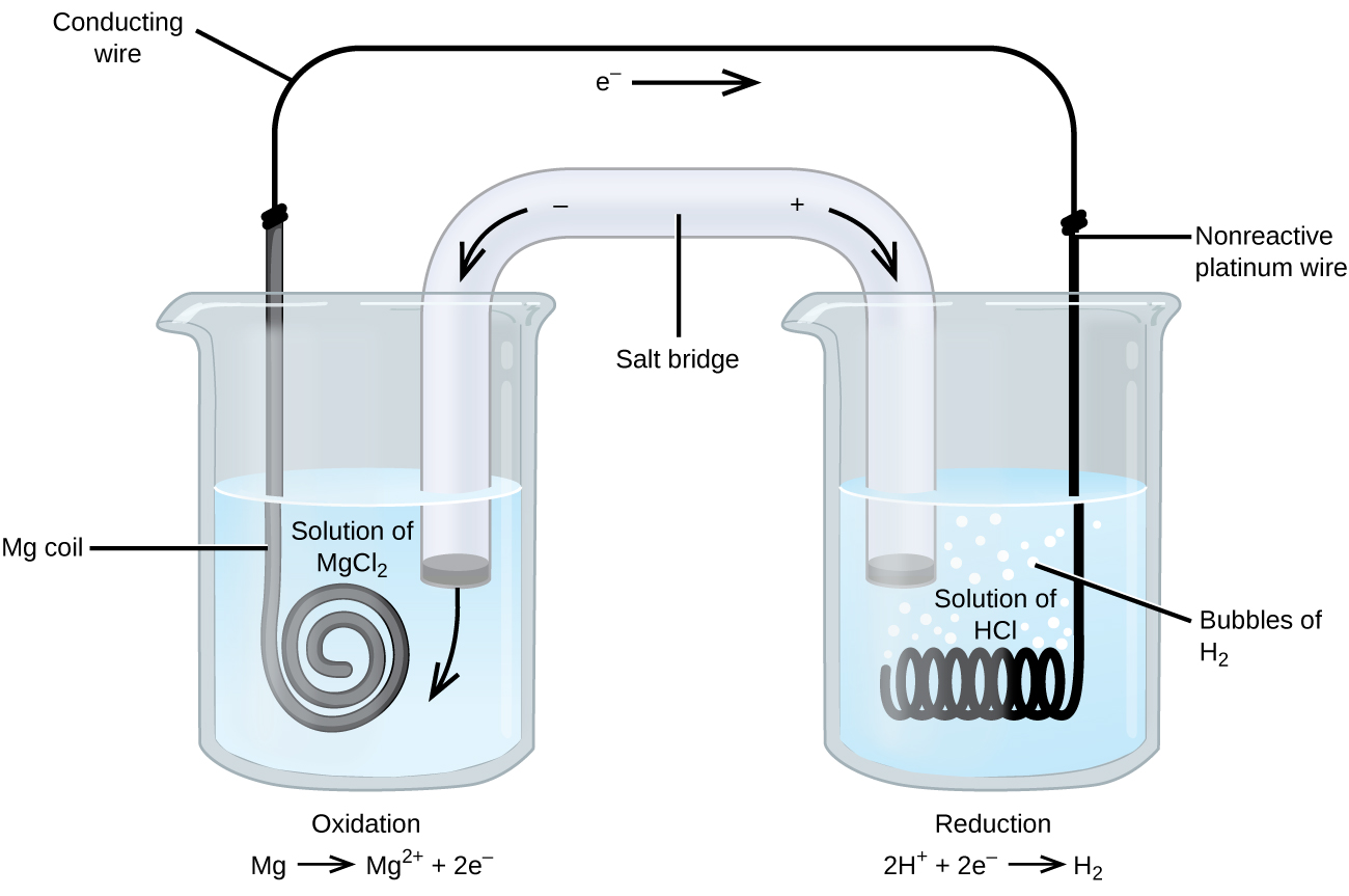 "This figure contains a diagram of an electrochemical cell. Two beakers are shown. Each is just over half full. The beaker on the left contains a colorless solution and is labeled ""Solution of M g C l subscript 2."" The beaker on the right contains a colorless solution and is labeled ""Solution of H C l."" A glass tube in the shape of an inverted U connects the two beakers at the center of the diagram. The tube contents are colorless. The ends of the tubes are beneath the surface of the solutions in the beakers and a small grey plug is present at each end of the tube. At the center of the diagram, the tube is labeled ""Salt bridge. Each beaker shows a metal coils submerged in the liquid. The beaker on the left has a thin grey coiled strip that is labeled ""M g coil."" The beaker on the right has a black wire that is oriented horizontally and coiled up in a spring-like appearance that is labeled ""Non reactive platinum wire."" A wire extends across the top of the diagram that connects the ends of the M g strip and platinum wire just above the opening of each beaker. This wire is labeled ""Conducting wire."" At the center of this wire above the two beakers near the center of the diagram is a right pointing arrow with the label ""e superscript negative"" at its base. Bubbles appear to be rising from the coiled platinum wire in the beaker. These bubbles are labeled ""Bubbles of H subscript 2."" An arrow points down and to the right from a plus sign at the upper right region of the salt bride. An arrow points down and to the left from a negative sign at the upper left region of the salt bride. A curved arrow extends from the grey plug at the left end of the salt bridge into the surrounding solution in the left beaker. The label ""Oxidation M g right pointing arrow M g superscript 2 plus plus 2 e superscript negative"" appears beneath the left beaker. The label ""Reduction 2 H superscript plus plus 2 e superscript negative right pointing arrow H subscript 2"" appears beneath the right beaker."