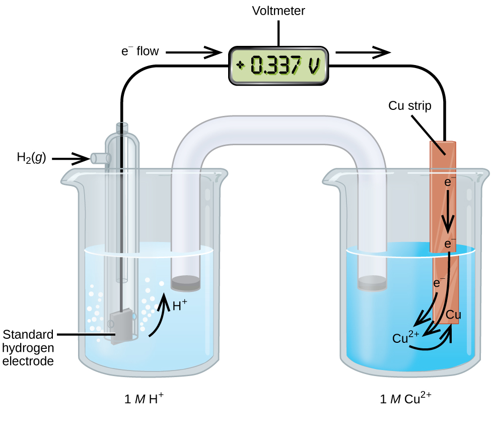 """This figure contains a diagram of an electrochemical cell. Two beakers are shown. Each is just over half full. The beaker on the left contains a clear, colorless solution and is labeled below as """"1 M H superscript plus."""" The beaker on the right contains a blue solution and is labeled below as """"1 M C u superscript 2 plus."""" A glass tube in the shape of an inverted U connects the two beakers at the center of the diagram. The tube contents are colorless. The ends of the tubes are beneath the surface of the solutions in the beakers and a small grey plug is present at each end of the tube. The beaker on the left has a glass tube partially submersed in the liquid. Bubbles are rising from the grey square, labeled """"Standard hydrogen electrode"""" at the bottom of the tube. A curved arrow points up to the right, indicating the direction of the bubbles. A black wire extends from the grey square up the interior of the tube through a small port at the top to a rectangle with a digital readout of """"positive 0.337 V"""" which is labeled """"Voltmeter."""" A second small port extends out the top of the tube to the left. An arrow points to the port opening from the left. The base of this arrow is labeled """"H subscript 2 ( g )."""" The beaker on the right has an orange-brown strip that is labeled """"C u strip"""" at the top. A wire extends from the top of this strip to the voltmeter. An arrow points toward the voltmeter from the left which is labeled """"e superscript negative flow."""" Similarly, an arrow points away from the voltmeter to the right. A curved arrow extends from the standard hydrogen electrode in the beaker on the left into the surrounding solution. The tip of this arrow is labeled """"H plus."""" An arrow points downward from the label """"e superscript negative"""" on the C u strip in the beaker on the right. A second curved arrow extends from another """"e superscript negative"""" label into the solution below toward the label """"C u superscript 2 plus"""" in the solution. A third """"e superscript negative"""" label pos"""