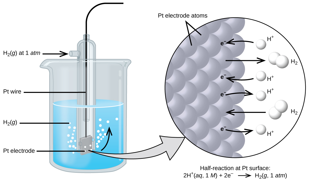 """The figure shows a beaker just over half full of a blue liquid. A glass tube is partially submerged in the liquid. Bubbles, which are labeled """"H subscript 2 ( g )"""" are rising from the dark grey square, labeled """"P t electrode"""" at the bottom of the tube. A curved arrow points up to the right, indicating the direction of the bubbles. A black wire which is labeled """"P t wire"""" extends from the dark grey square up the interior of the tube through a small port at the top. A second small port extends out the top of the tube to the left. An arrow points to the port opening from the left. The base of this arrow is labeled """"H subscript 2 ( g ) at 1 a t m."""" A light grey arrow points to a diagram in a circle at the right that illustrates the surface of the P t electrode in a magnified view. P t atoms are illustrated as a uniform cluster of grey spheres which are labeled """"P t electrode atoms."""" On the grey atom surface, the label """"e superscript negative"""" is shown 4 times in a nearly even vertical distribution to show electrons on the P t surface. A curved arrow extends from a white sphere labeled """"H superscript plus"""" at the right of the P t atoms to the uppermost electron shown. Just below, a straight arrow extends from the P t surface to the right to a pair of linked white spheres which are labeled """"H subscript 2."""" A curved arrow extends from a second white sphere labeled """"H superscript plus"""" at the right of the P t atoms to the second electron shown. A curved arrow extends from the third electron on the P t surface to the right to a white sphere labeled """"H superscript plus."""" Just below, an arrow points left from a pair of linked white spheres which are labeled """"H subscript 2"""" to the P t surface. A curved arrow extends from the fourth electron on the P t surface to the right to a white sphere labeled """"H superscript plus."""" Beneath this atomic view is the label """"Half-reaction at P t surface: 2 H superscript plus ( a q, 1 M ) plus 2 e superscript negative right pointing arrow H subsc"""