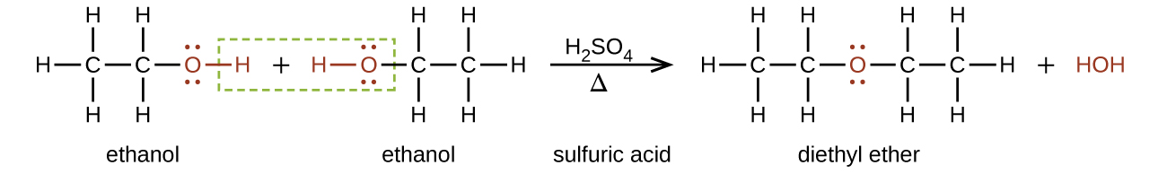 """This figure shows a reaction. The first molecule, which is labeled, """"ethanol,"""" is a two C atom chain. The first C atom is bonded to three H atoms and a second C atom. The second C atom is bonded to a red O atom with two sets of electron dots. The O atom has a red bond to a red H atom. There is a plus sign. The next molecule, which is labeled, """"ethanol,"""" is a red H atom with a red bond to a red O atom with two pairs of electron dots. The O atom is bonded to a C atom which is bonded to two H atoms and a second C atom. The second C atom is bonded to three H atoms. There is a green dotted box around the red H atom in the first molecule, the plus sign, and the red H and O atoms in the second molecule. To the right o the second molecule there is an arrow labeled H subscript 2 S O subscript 4 above and Greek capital delta below. The arrow is labeled, """"sulfuric acid."""" The resulting molecules are a C atom bonded with three H atoms and a second C atom. The second C atom is bonded to two H atoms and a red O atom. The red O atom has two sets of electron dots. The O atom is bonded to a third C atom which is bonded to two H atoms and a fourth C atom. The fourth C atom is bonded to three H atoms. This molecule is labeled, """"diethyl ether."""" There is a plus sign and a red H O H."""