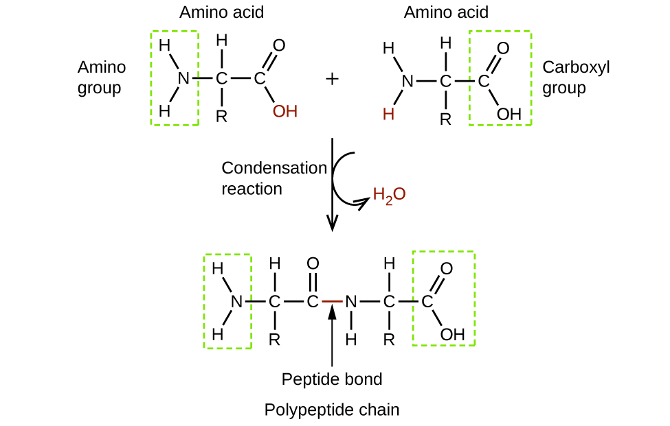 enzymes speed up the biological catalysts and are specific to a certain reaction Speeding up reactions: biological vs chemical catalysts  there is some work  being done designing enzymes for specific purposes,.