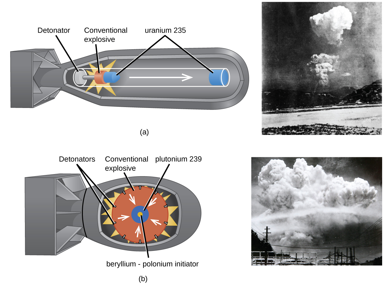 """Two diagrams are shown, each to the left of a photo, and labeled """"a"""" and """"b."""" Diagram a shows the outer casing of a bomb that has a long, tubular shape with a squared-off tail. Components in the shell show a tube with a white disk labeled """"Detonator"""" on the left, an orange disk with a bright yellow starburst drawn around it labeled """"Conventional explosive"""" in the middle and a right-facing arrow leading to a blue disk in the nose of the bomb labeled """"uranium 235."""" A small blue cone next to the orange disk is shares the label of """"uranium 235."""" A black and white photo next to this diagram shows a far-off shot of a rising cloud over a landscape. Diagram b shows the outer casing of a bomb that has a short, rounded shape with a squared-off tail. Components in the shell show a large orange circle labeled """"Conventional explosive"""" with a series of black dots around its edge, labeled """"Detonators,"""" and a yellow starburst behind it. White arrows face from the outer edge of the orange circle to a blue circle in the center with a yellow core. The blue circle is labeled """"plutonium 239"""" while the yellow core is labeled """"beryllium, dash, polonium initiator."""" A black and white photo next to this diagram shows a far-off shot of a giant rising cloud over a landscape."""