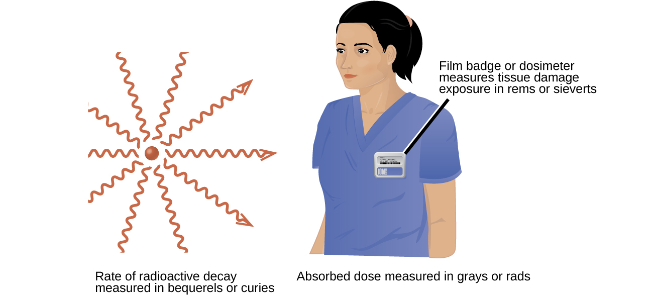 """Two images are shown. The first, labeled """"Rate of radioactive decay measured in becquerels or curies,"""" shows a red sphere with ten red squiggly arrows facing away from it in a 360 degree circle. The second image shows the head and torso of a woman wearing medical scrubs with a badge on her chest. The caption to the badge reads """"Film badge or dosimeter measures tissue damage exposure in rems or sieverts"""" while a phrase under this image states """"Absorbed dose measured in grays or rads."""""""