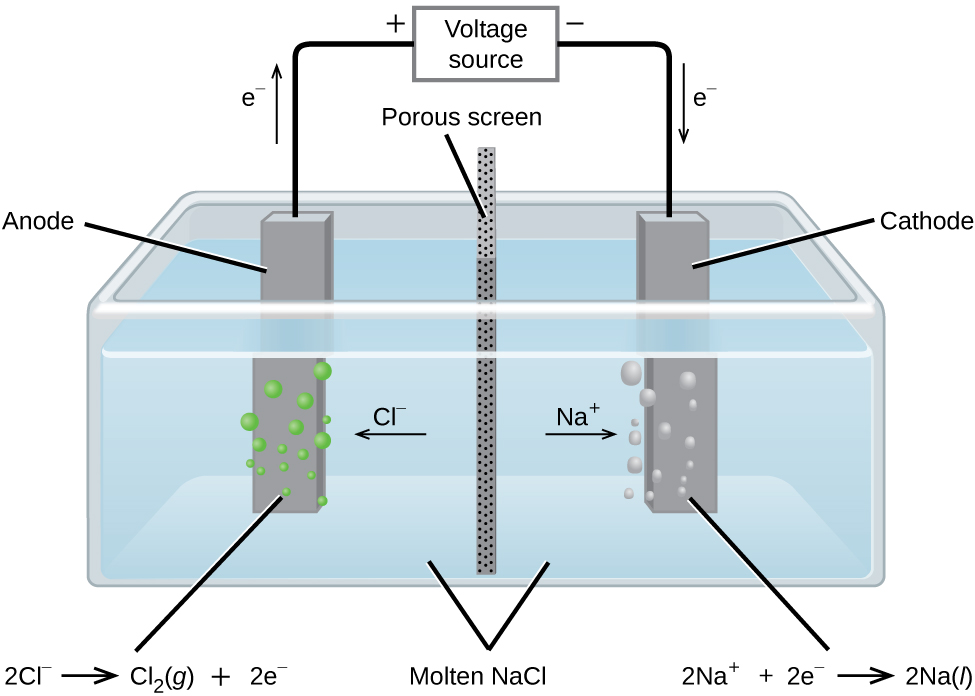 "This diagram shows a tank containing a light blue liquid, labeled ""Molten N a C l."" A vertical dark grey divider with small, evenly distributed dark dots, labeled ""Porous screen"" is located at the center of the tank dividing it into two halves. Dark grey bars are positioned at the center of each of the halves of the tank. The bar on the left, which is labeled ""Anode"" has green bubbles originating from it. The bar on the right which is labeled ""Cathode"" has light grey bubbles originating from it. An arrow points left from the center of the tank toward the anode, which is labeled ""C l superscript negative."" An arrow points right from the center of the tank toward the cathode, which is labeled ""N a superscript plus."" A line extends from the tops of the anode and cathode to a rectangle centrally placed above the tank which is labeled ""Voltage source."" An arrow extends upward above the anode to the left of the line which is labeled ""e superscript negative."" A plus symbol is located to the left of the voltage source and a negative sign it located to its right. An arrow points downward along the line segment leading to the cathode. This arrow is labeled ""e superscript negative."" The left side of below the diagram is the label ""2 C l superscript negative right pointing arrow C l subscript 2 ( g ) plus 2 e superscript negative."" At the right, below the diagram is the label ""2 N a superscript plus plus 2 e superscript negative right pointing arrow 2 N a ( l )."""