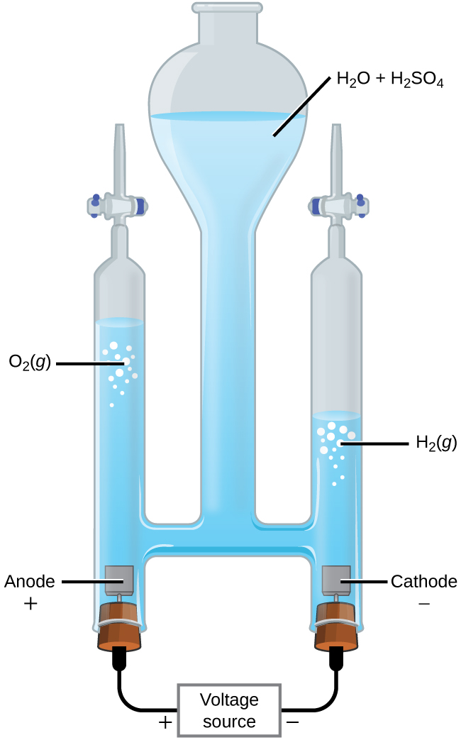 "This figure shows an apparatus used for electrolysis. A central chamber with an open top has a vertical column extending below that is nearly full of a clear, colorless liquid, which is labeled ""H subscript 2 O plus H subscript 2 S O subscript 4."" A horizontal tube in the apparatus connects the central region to vertical columns to the left and right, each of which has a valve or stopcock at the top and a stoppered bottom. On the left, the stopper at the bottom has a small brown square connected just above it in the liquid. The square is labeled ""Anode plus."" A black wire extends from the stopper at the left to a rectangle which is labeled ""Voltage source"" on to the stopper at the right. The left side of the rectangle is labeled with a plus symbol and the right side is labeled with a negative sign. The stopper on the right also has a brown square connected to it which is in the liquid in the apparatus. This square is labeled ""Cathode negative."" The level of the solution on the left arm or tube of the apparatus is significantly higher than the level of the right arm. Bubbles are present near the surface of the liquid on each side of the apparatus, with the bubbles labeled as ""O subscript 2 ( g )"" on the left and ""H subscript 2 ( g )"" on the right."