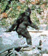 http://www.kk.org/cooltools/archives/bigfoot.jpg