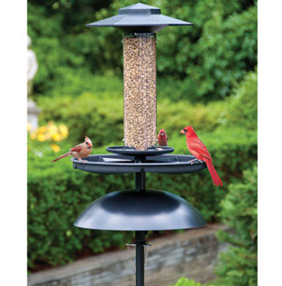 Effort-Less Bird Feeder