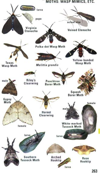 kaufman-insects2sm.jpg